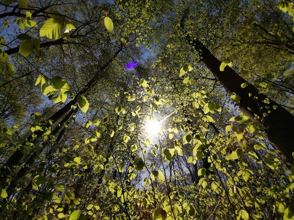 Свет от солнца рассматривается как идеальный случай, который соответствует индексу цветопередачи 100.